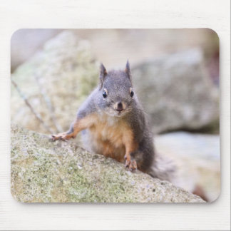 Cute Squirrel Staring Mouse Pad