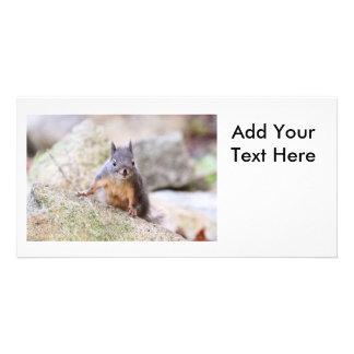 Cute Squirrel Staring Photo Card