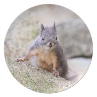 Cute Squirrel Staring Plates