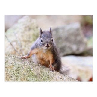 Cute Squirrel Staring Postcard