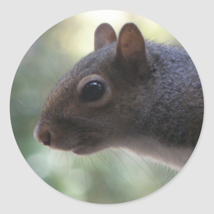 Cute Squirrel Stickers