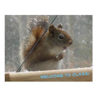 Cute Squirrel Student Welcome Teacher Postcard