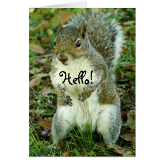 Cute Squirrel, Thinking of You Greeting Card