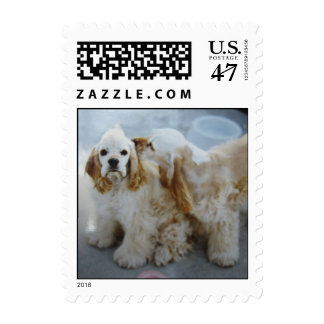 Cute stamp of two puppies