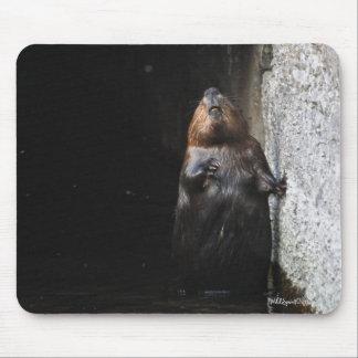 Cute Standing Wild Beaver Wildlife Photo Mouse Pad