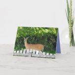 "Cute Staring Deer On ""Just Because"" Card"