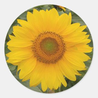 Cute Sunny Yellow Sunflower Classic Round Sticker
