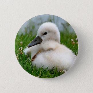 Cute Swan Chick - Button
