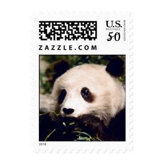 Cute Sweet Panda Bear Munching Stamps Stamp