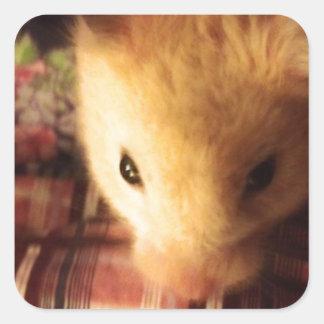Cute Syrian Hamster Square Sticker