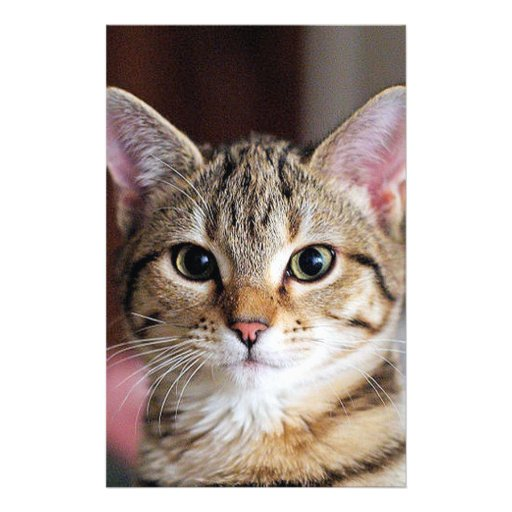 Cute Tabby CAt Kitten Custom Stationery