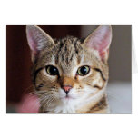 Cute Tabby CAt Kitten Greeting Card