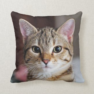 Cute Tabby Cat Kitten Pillows