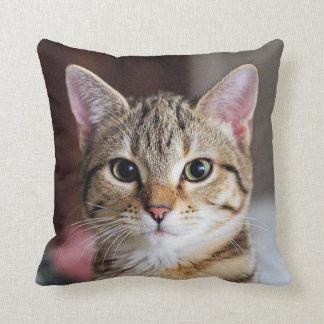 Cute Tabby Cat Kitten Throw Pillow