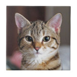 Cute Tabby Cat Kitten Tile