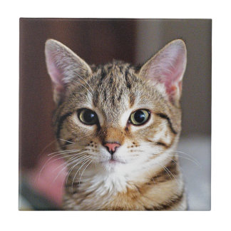 Cute Tabby Cat Kitten Ceramic Tiles