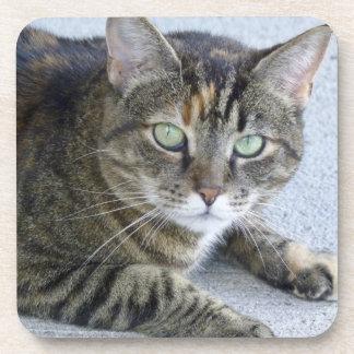 Cute Tabby Cat Photo Beverage Coaster