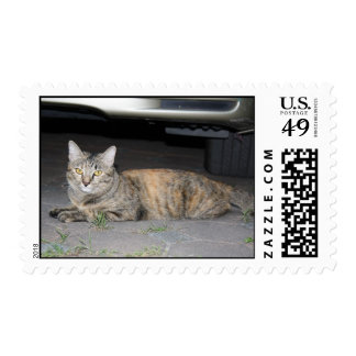 Cute tabby cat postage stamp