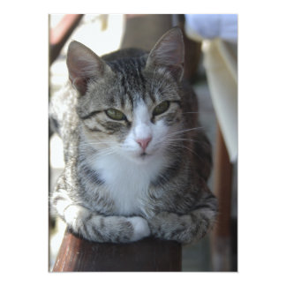 Cute Tabby Cat - Sitting On The Fence Card