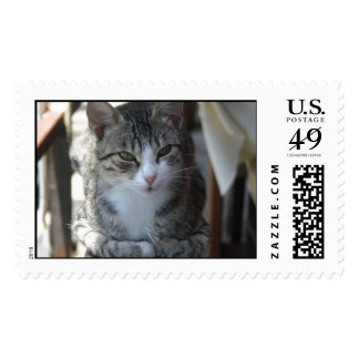 Cute Tabby Cat - Sitting On The Fence Postage Stamp