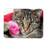 Cute Tabby Cat With Rose Vinyl Magnets