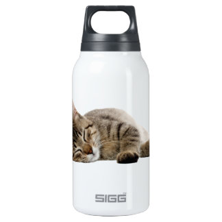 Cute tabby kitten insulated water bottle