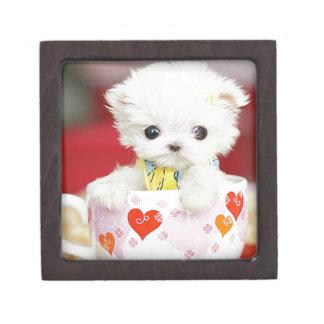 cute tea cup puppy keepsake box