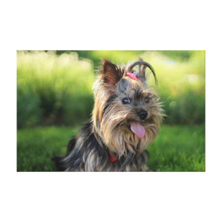 Cute terrier dog pink tongue outside canvas print