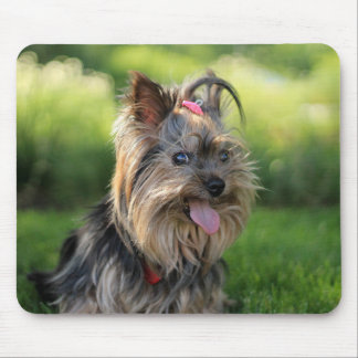 Cute terrier dog pink tongue outside mouse pad
