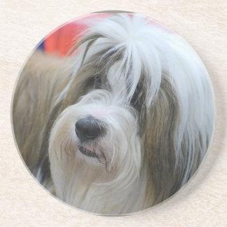 Cute Tibetan Terrier Dog Coasters