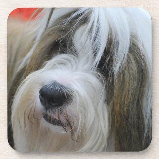 Cute Tibetan Terrier Dog Drink Coasters