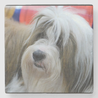 Cute Tibetan Terrier Dog Stone Beverage Coaster