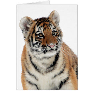 Cute tiger cub portrait blank customizable card