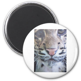 Cute Tiger Eyes 2 Inch Round Magnet