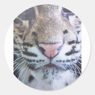 Cute Tiger Eyes Classic Round Sticker