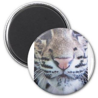 Cute Tiger Eyes Magnet