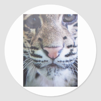Cute Tiger Eyes Stickers