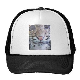 Cute Tiger Eyes Trucker Hat