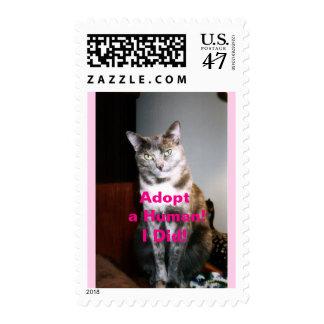 Cute Tortie Pet Rescue Cat Postage