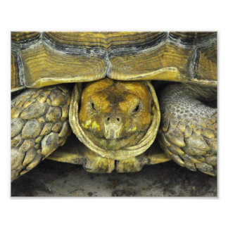 Cute Tortoise Hello Poster Photo Print