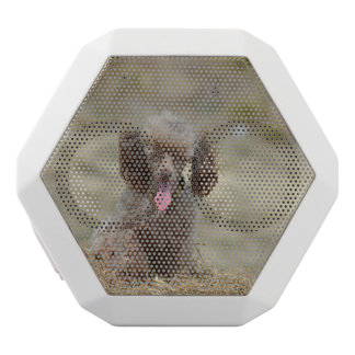Cute Toy Poodle White Boombot Rex Bluetooth Speaker