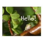 Cute tree frog says hello! Amphibian style! Postcard