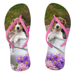 Cute Tricolor Beagle Dog Puppy in a Milk Churn - Flip Flops