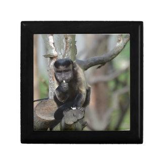 Cute Tufted Capuchin Monkey Trinket Boxes