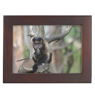 Cute Tufted Capuchin Monkey Keepsake Boxes