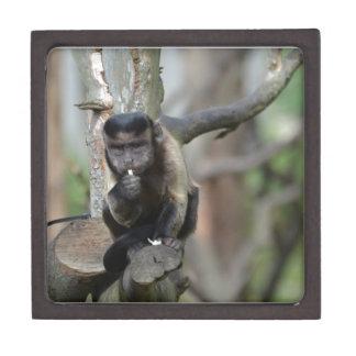 Cute Tufted Capuchin Monkey Premium Trinket Box