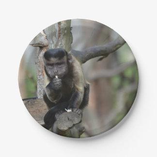 Cute Tufted Capuchin Monkey 7 Inch Paper Plate
