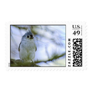 Cute Tufted Titmouse with Raised Tuft Postage