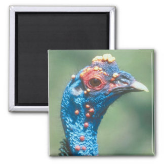Cute Turkey 2 Inch Square Magnet