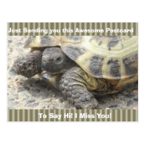 "Cute Turtle ""I Miss YOU"" Saying Hi Post Card"